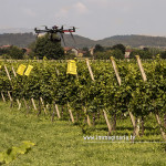 Riprese aeree col drone sui vigneti di Franciacorta